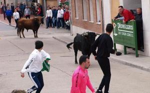 Un concurrido encierro cierra los festejos taurinos de Pedrajas