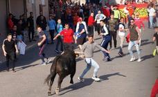 Suelta de toros del cajón el Sábado Santo en Pedrajas de San Esteban