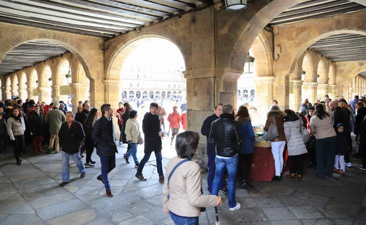 Miles de Libros invaden la Plaza Mayor de Salamanca