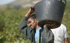 La mejoría económica anima la llegada de trabajadores extranjeros a Valladolid
