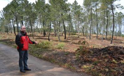 El efecto de un gusano en pinos extremeños hipoteca la obra de una residencia salmantina