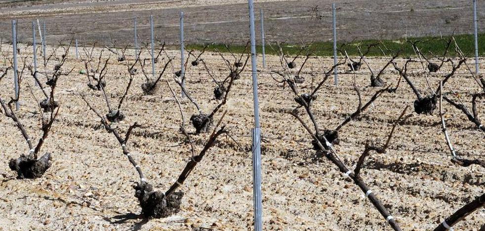 Viticultores de la DO Rueda denuncian robos de postes y daños en las viñas