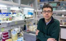 El Centro del Cáncer desvela un mecanismo molecular que previene la enfermedad inflamatoria intestinal