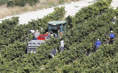 Asaja alerta de subidas «alarmantes» de hasta el 40% en los seguros del cereal y el viñedo