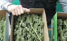 Dos investigados por venta de marihuana y drogas de síntesis en Toro, Zamora