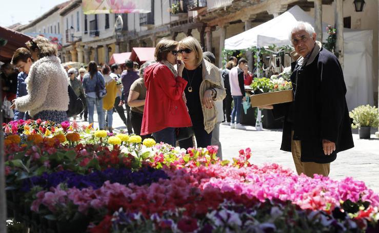 Mercado de las flores en Ampudia