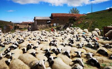 Los ganaderos palentinos, satisfechos con la apertura de la IGP del lechazo a toda la comunidad