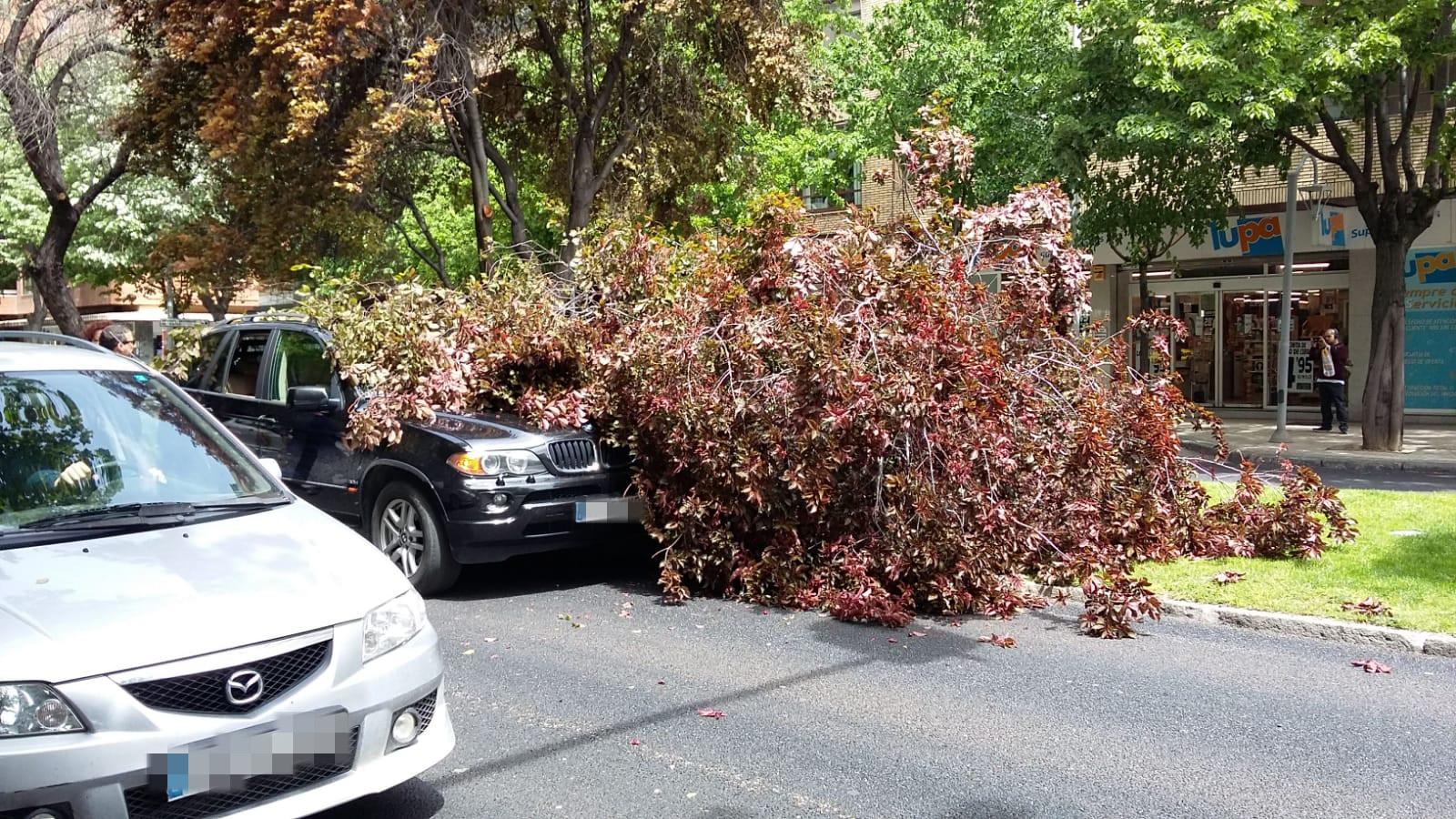El viento tira un árbol sobre un vehículo que circulaba por una avenida de Palencia