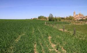 El campo segoviano envejece: 22.600 agricultores superan los 65 años y los que bajan de 25 no llegan al medio millar