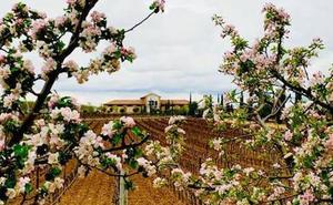 La bodega Heredad de Urueña podrá etiquetar sus referencias como DOP Vino de Pago
