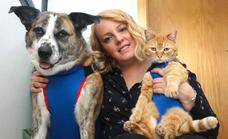 Diseñadora de prendas protectoras para animales