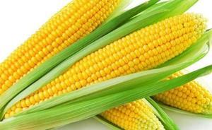 El maíz, con sabor y color de México