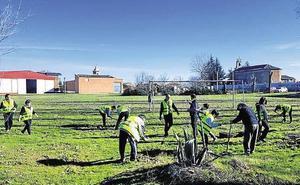 Más de 500.000 árboles para los montes de Palencia, Burgos y León