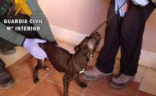 Denunciado un 'okupa' por convivir con tres perros a los que estaba dejando morir de hambre