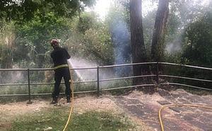 Los incendios intencionados de pelusas causan cuatro salidas diarias de los Bomberos de Valladolid