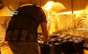 Desmantelan una plantación de marihuana en un garaje en la localidad vallisoletana de Laguna