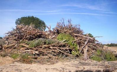 Miembros de una cooperativa agrícola vallisoletana se enfrentan a prisión por talar pinares de otros para regadío