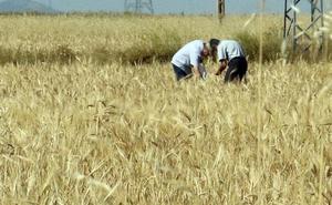 Asaja prevé la peor cosecha en cinco años tras la «catastrófica» de 2017