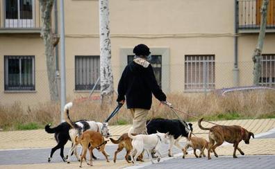 El Ayuntamiento de Carbajosa contratará detectives para sancionar a quienes no recojan los excrementos de sus perros