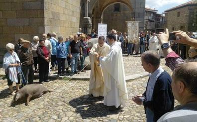 La asociación Asperger, destinataria de la rifa del marrano de San Antón de La Alberca