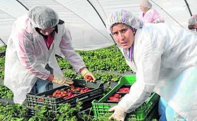 Segovia ofrece contratos en origen a 268 temporeras marroquíes de la fresa