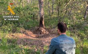La Guardia Civil de Palencia desactiva diez puntos de prácticas furtivas de caza y recupera una cabeza de ciervo