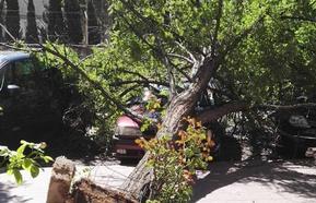 Un árbol de grandes dimensiones cae sobre dos coches en la calle de la Vía de Valladolid