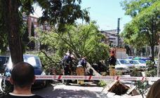 Un árbol cae dobre dos vehículos en la calle de la Vía de Valladolid