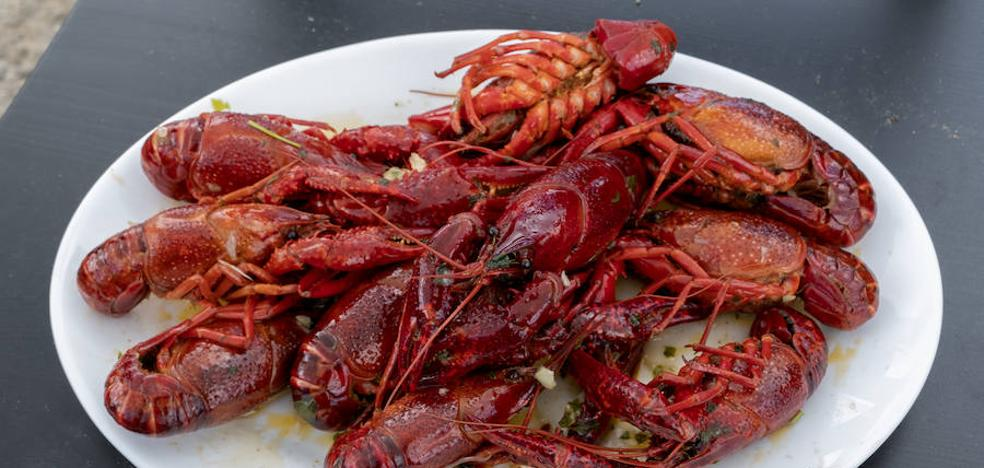 Los secretos del cangrejo de río