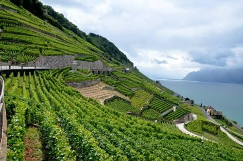 Los mejores viñedos del mundo que es aconsejable visitar al menos una vez en la vida