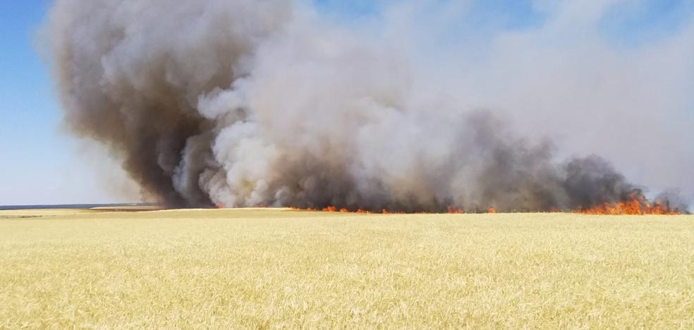 Más de 270 hectáreas calcinadas en el incendio de Las Berlanas