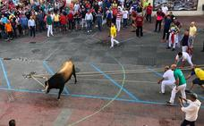 El Toro Enmaromado de Benavente completa un recorrido acortado y sin incidentes graves