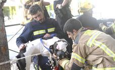 Retiran a un perro de su dueño por no tener los permisos adecuados
