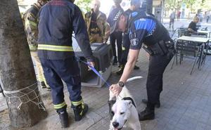 La policía de Valladolid retira la custodia de un pitbull a su dueño por carecer de los permisos necesarios