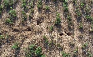 La Junta autoriza el laboreo con volteo ante el incremento de topillos