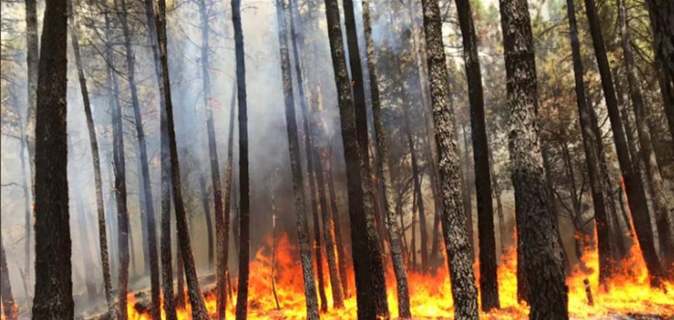 Las llamas arrasan una superficie arbolada de Gavilanes, al sur de Gredos