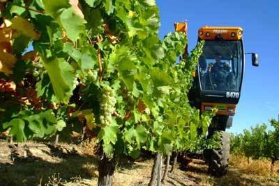 El Instituto de Ciencias de la Vid y del Vino propone una técnica para retrasar la maduración de la uva