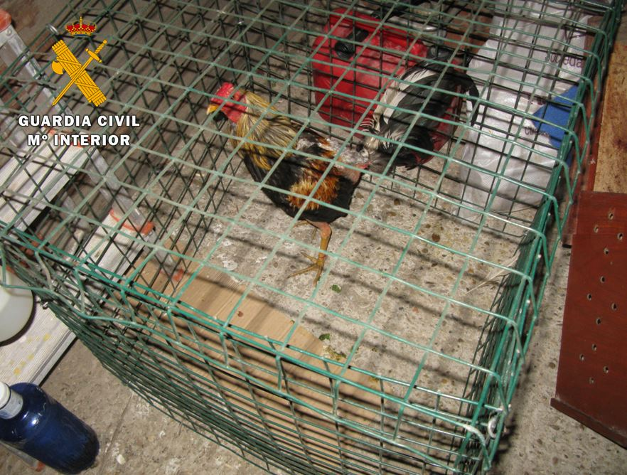 Trece detenidos por la celebración de peleas de gallos en Tordesillas