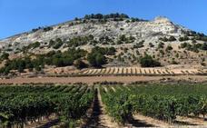 Agricultura autoriza 708,47 hectáreas de nuevas plantaciones de viñedo en Castilla y León