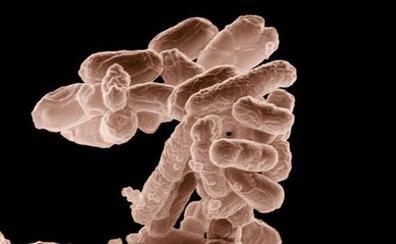 ¿Qué es la bacteria escherichia coli que invade la costa valenciana?