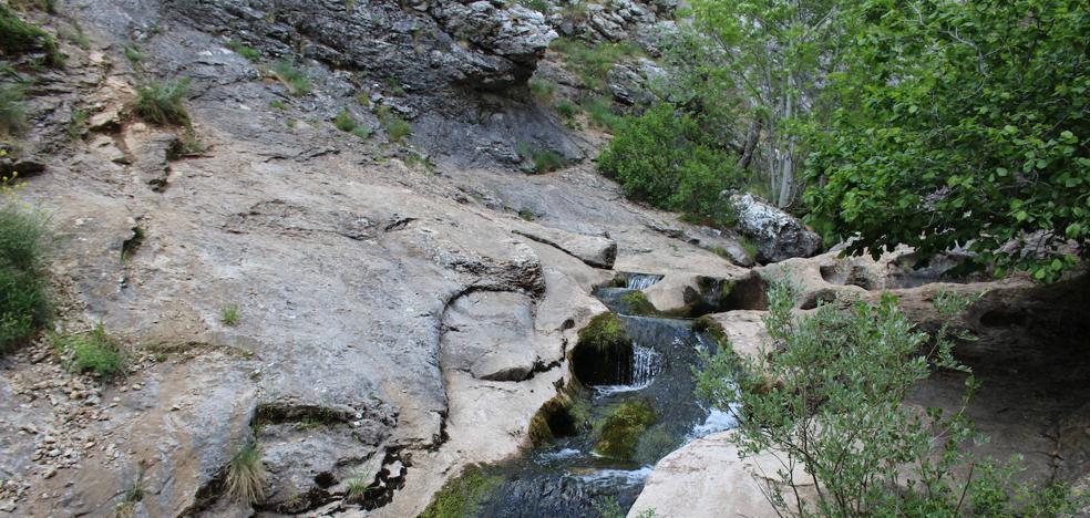 El Faedo de Ciñera: el bosque encantado existe