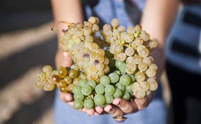 Los hermanos Verdejita, Sauvignon y Viura ayudarán a conocer la Ruta del Vino de Rueda en familia