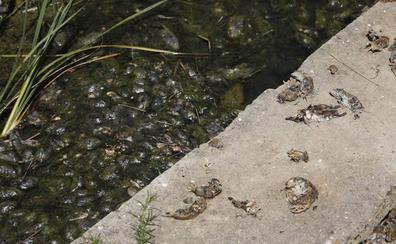 Sanidad confirma cuatro casos de tularemia en la provincia de Palencia e investiga otros tres