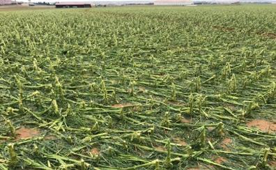Agroseguro estima los daños por el pedrisco en unas 60.000 hectáreas