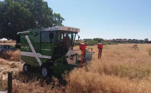 Un proyecto coordinado por el Irnasa muestra la rentabilidad de la agricultura ecológica