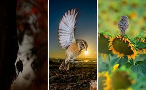 Fotografíar aves, un plan para el verano que tiene premio