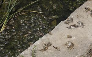 El PSOE insta a la Junta a que actúe para mantener un control efectivo de la plaga de topillos