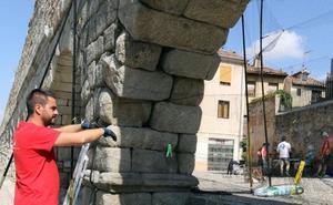 Segovia acoge el marcaje por primera vez en España de vencejos comunes con dispositivos GPS