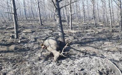 Continúa activo y con nivel 1 el incendio que desde ayer arde en Sotillo de la Adrada (Ávila)