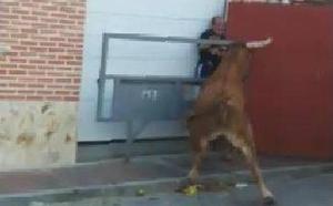 «Parece que el toro no le hace nada, pero tiene un hematoma en el hígado y tres costillas rotas»